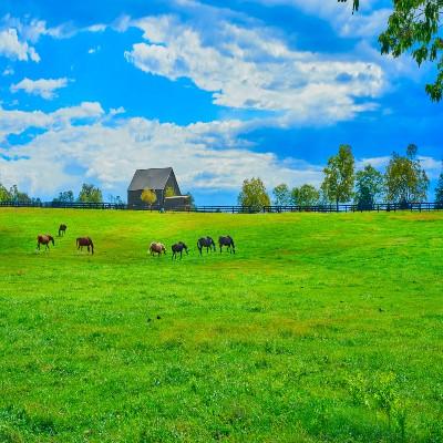 Lexington Kentucky area chiropractic practice for sale