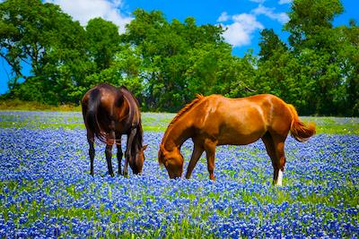 Austin Texas Area Chiropractic Practice for Sale